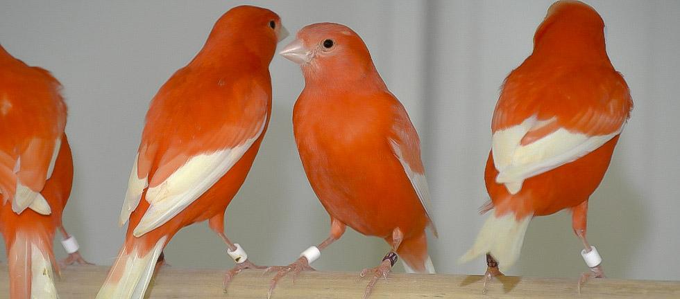 Ongebruikt Vogelhandel en export van exotische vogels - Vogelhandel Jado GA-04